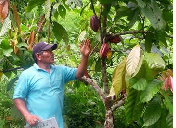 Indigene Führer der Cacao-Tour zu erklären, was macht einen guten Kakao pod